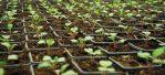 cultivo-interior-alkimia-talavera