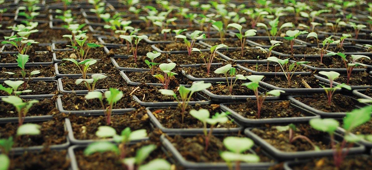 Cultivo alkimia talavera for Bombillas cultivo interior